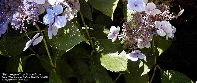 """Hydrangeas, August 26, 2002"" by Bruce Brown, form ""The Summer Before The War"" (2002)"