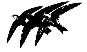 swifts.jpg (8901 bytes)